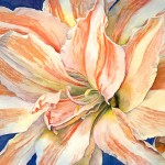 Amaryllis I, watercolor