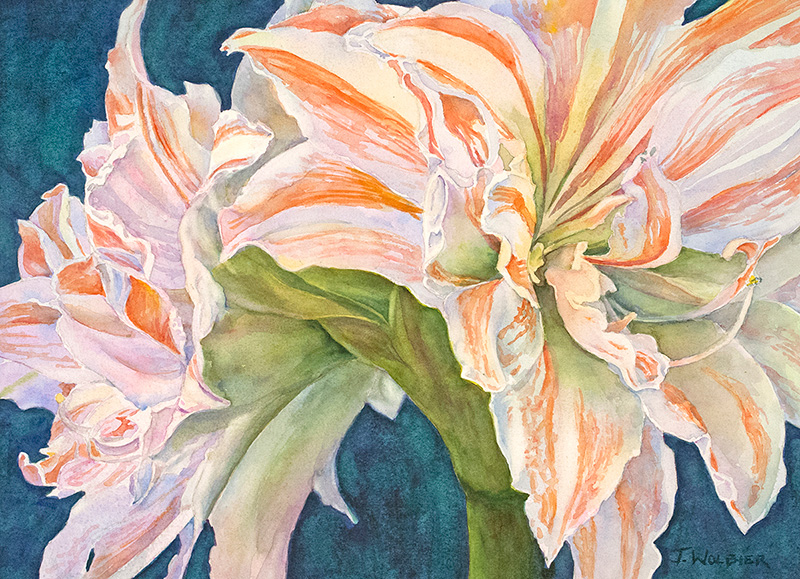 Amaryllis II, watercolor