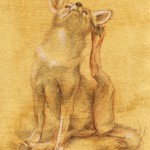 Coyote Pup, colored pencil on prepared paper