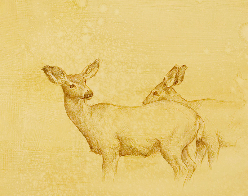 Mule Deer Does, colored pencil on prepared paper