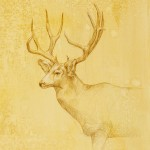 Mule Deer Stag, colored pencil on prepared paper