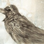 Raven Study I, graphite, pen and ink, charcoal on prepared paper
