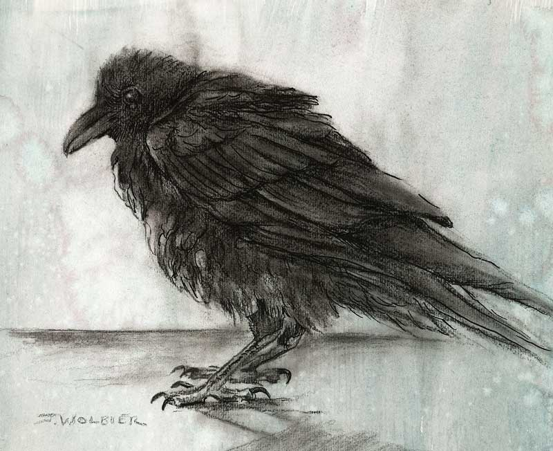 Raven Study II, graphite, pen and ink, charcoal on prepared paper