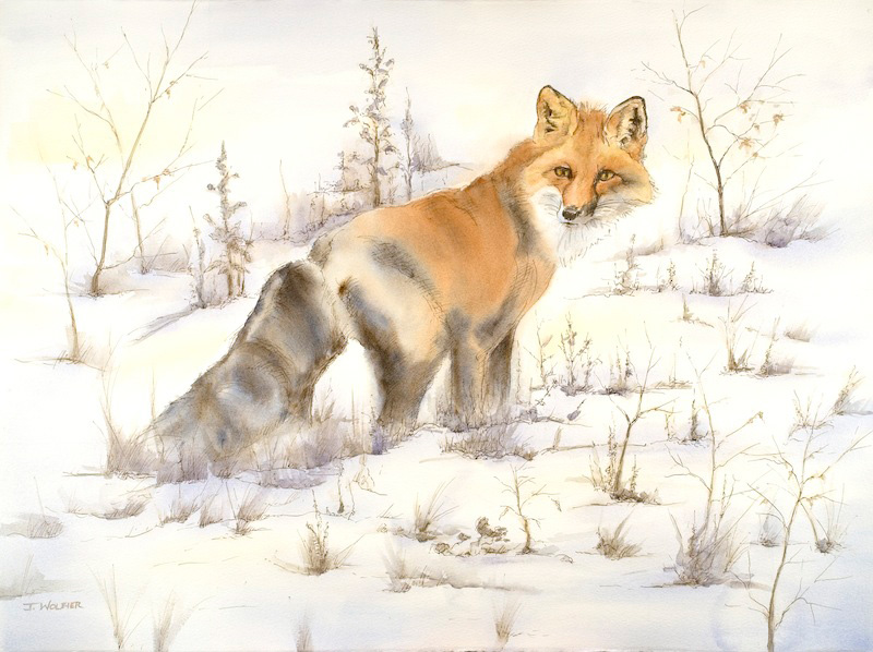 Winter Fox, pen and ink with watercolor
