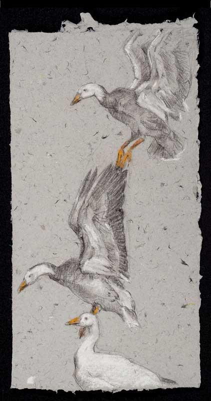 Snow Geese, colored pencil on handmade paper