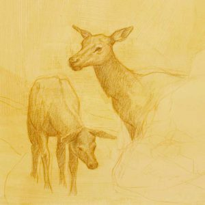 Elk Cow with Calf - Colored pencil on prepared paper.
