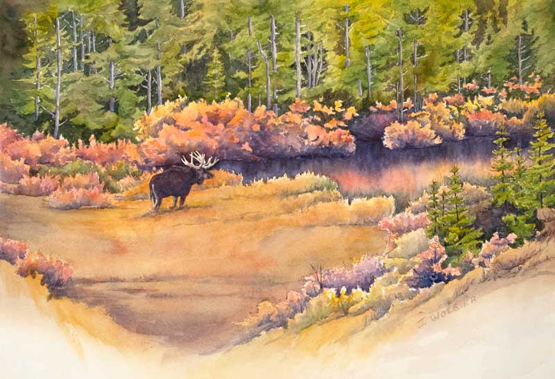 Indian Peaks Moose, pen and ink with watercolor