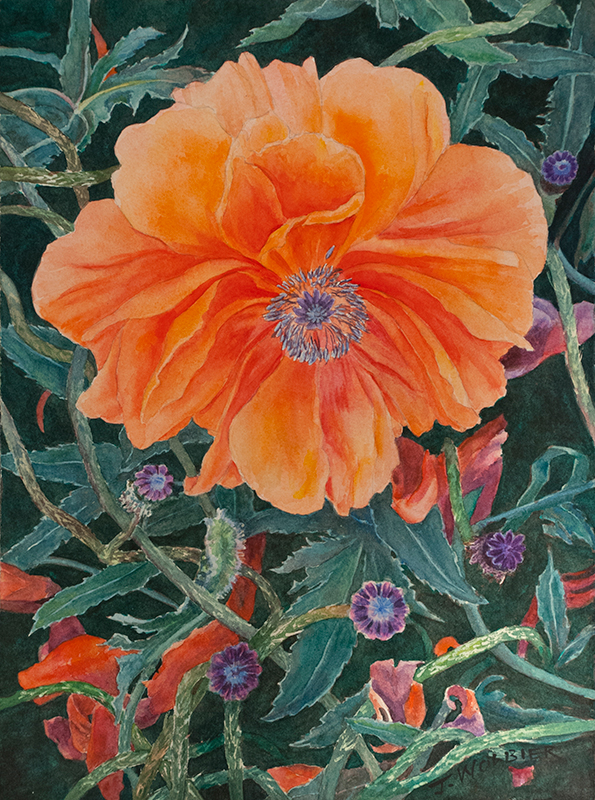 Summer Poppy, original watercolor