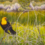 Yellow-headed Blackbird is a pen and ink with watercolor.